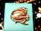 Tiffany tropical fish  DBGEMS - image 1