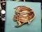 Tiffany tropical fish  DBGEMS - image 5