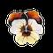 An Enamel Pansy Brooch by David Andersen - image 1